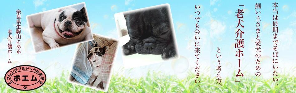 老犬介護ホーム|ポエム・フレンチブルドッグのお家